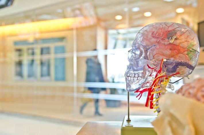 脳の説明 透明の骸骨の写真