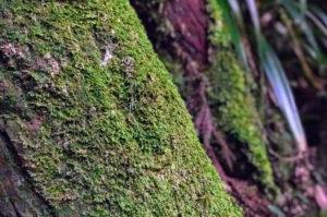 6号路の木に生えていた苔