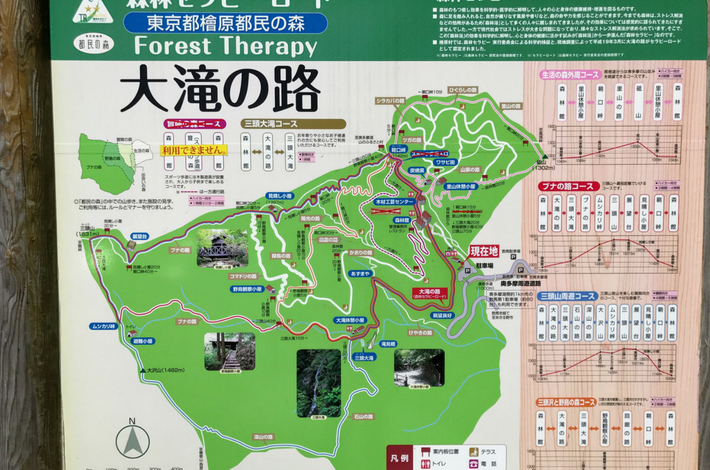 都民の森の中のmap