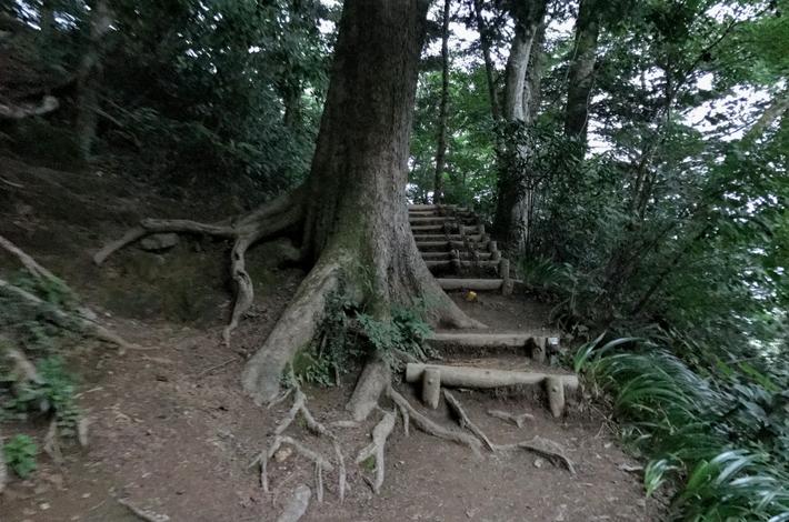 6号路木の階段のはじまり