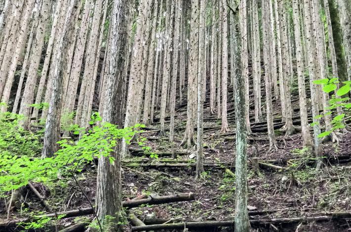 菅平の滝への道に木が並ぶ