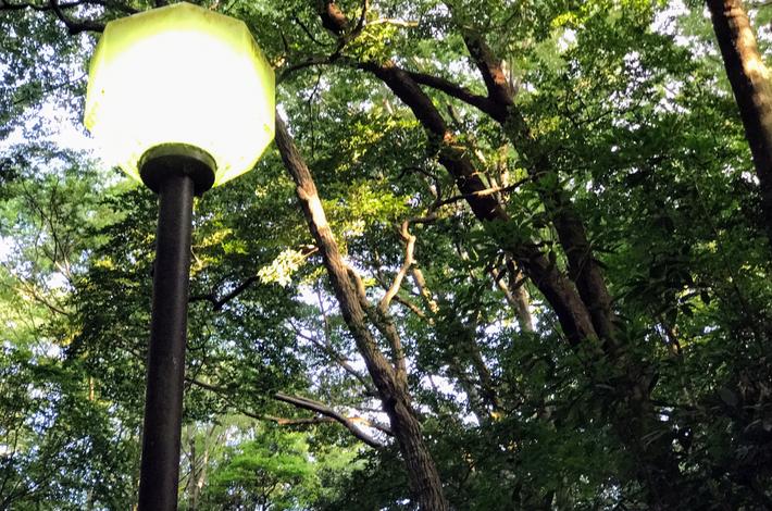 等々力渓谷の川沿いの街灯