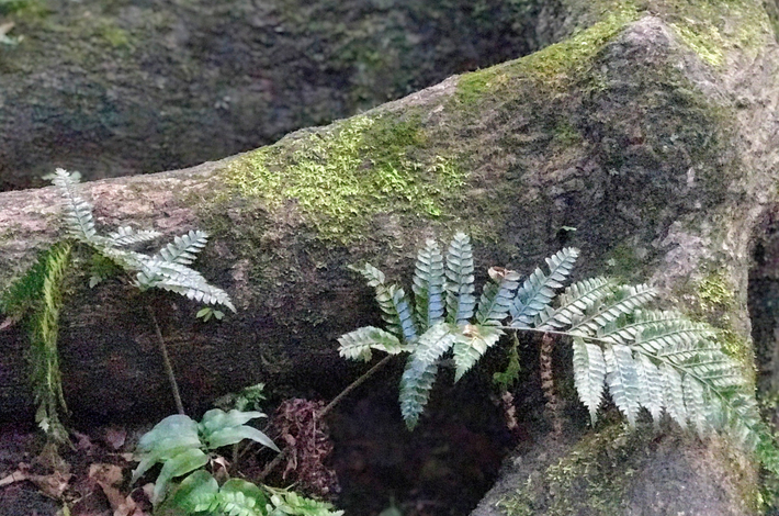 等々力渓谷の木の根っこにある苔