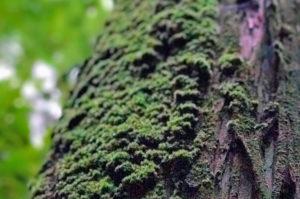 木に生えている苔