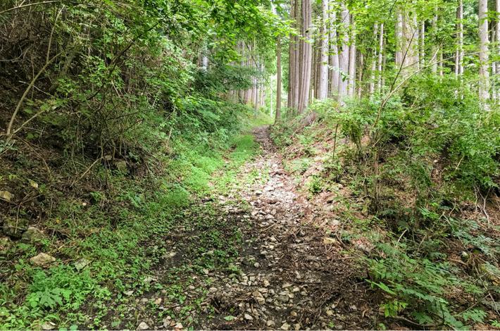 菅平の滝への道 足下が悪い