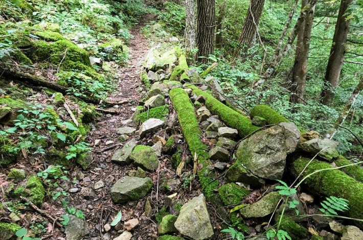 菅平の滝への道 足下が悪く木に苔