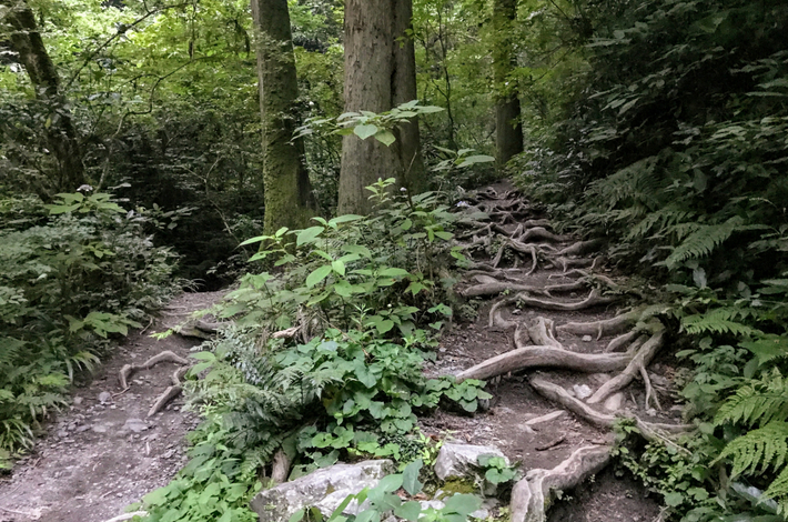 6号路の木の根はう道のり