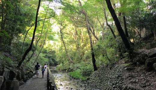 都心に大自然「等々力渓谷」公園散歩コース! アクセス抜群でデートにも