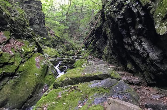 ロックガーデンに大きな岩