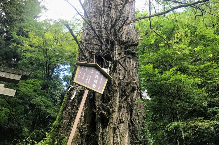 御岳山へ徒歩で行く参道入口にある神代銀杏