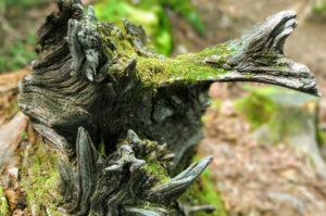 檜原都民の森 美しい木のかたち