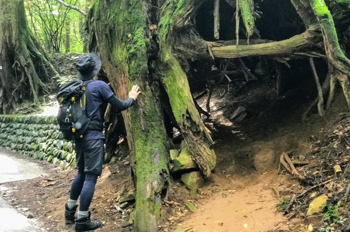 御岳山へ徒歩の参道の大きな杉の木を男性が見上げている