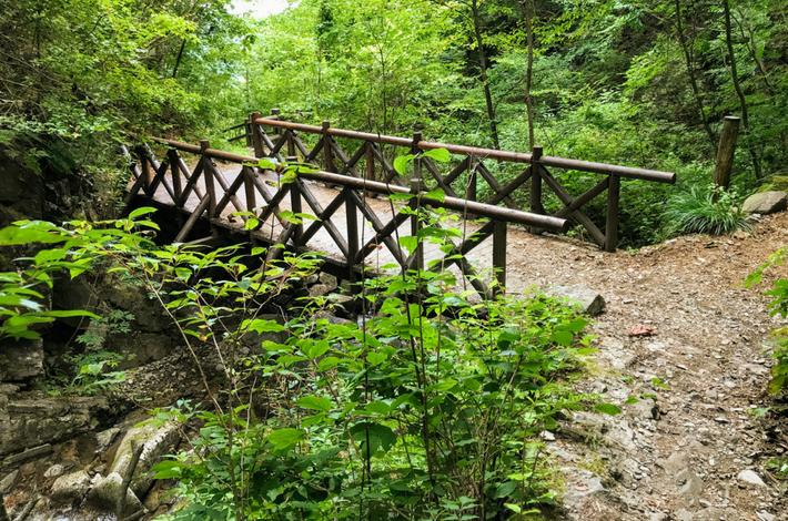 ブナの路 木橋で反対側に渡る
