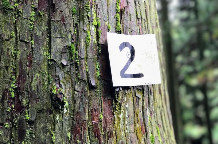 御岳山へ徒歩の参道にある杉に2の数字が貼られている