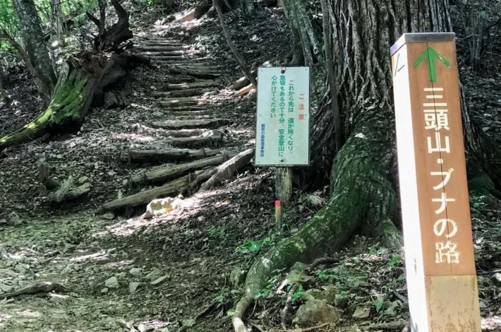檜原都民の森ブナの道の入口