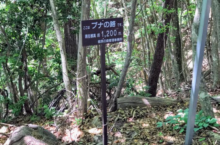 檜原都民の森ブナの看板