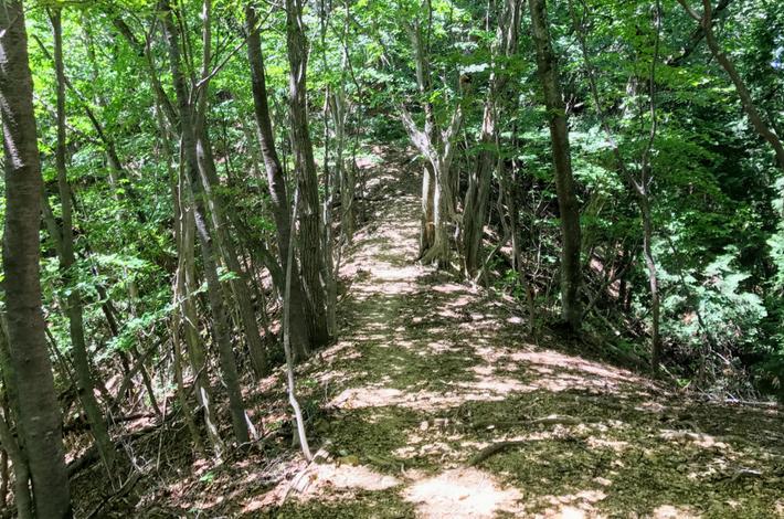 檜原都民の森まわりがブナの路