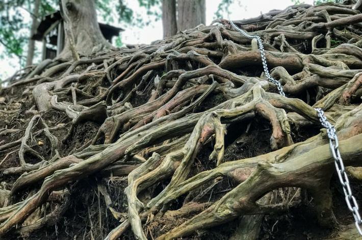 天狗岩に登ると木の根がはっている