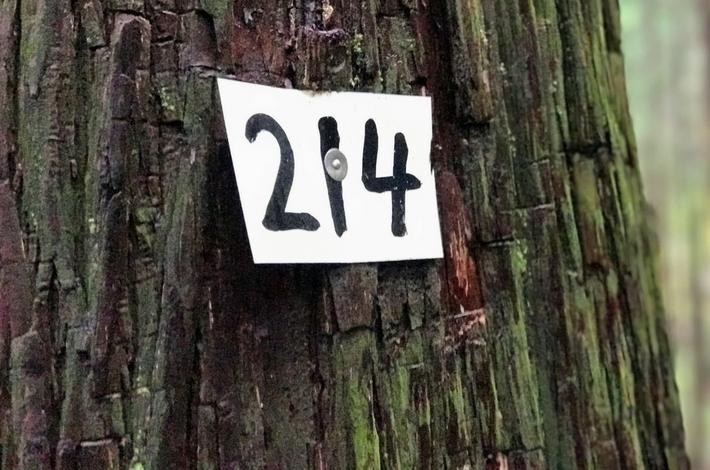 御岳山へ徒歩の参道にある杉に214の数字が貼られている