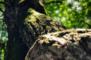 檜原都民の森の木のうねり