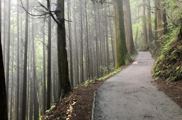 御岳山へ徒歩の参道に霧が立ちこめる