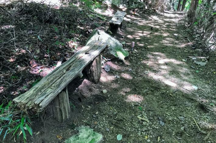 檜原都民の森 休憩用のベンチ
