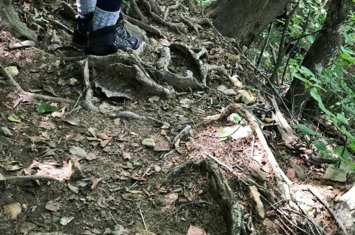 檜原都民の森 足場の悪い回り道