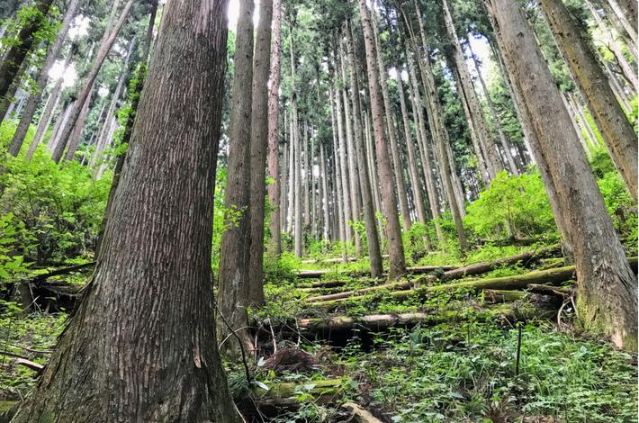 滝への道の周りの木々
