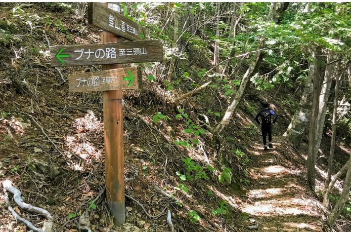 檜原都民の森 回り道への分かれ道