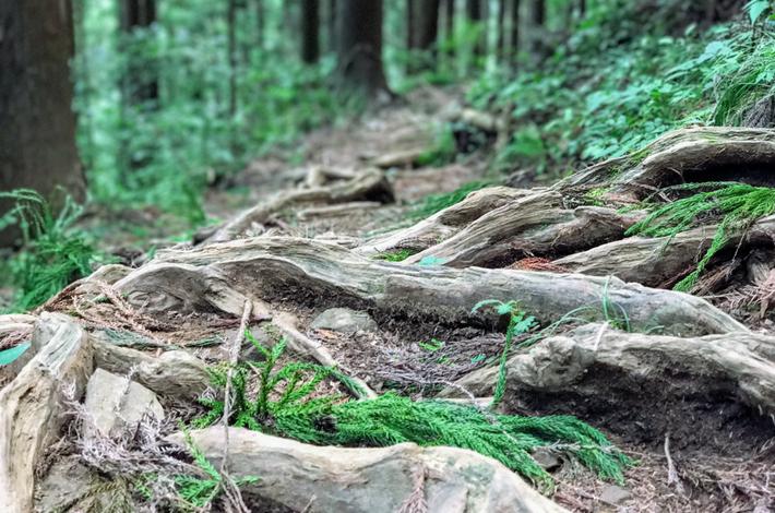 七代の滝への道 木の根が這う様な道が続く