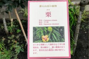 漱石山房記念館にある栗の説明パネル