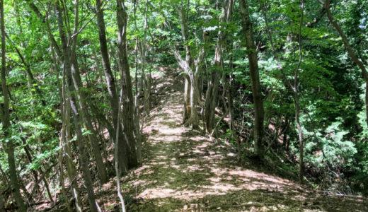 檜原都民の森のブナの路