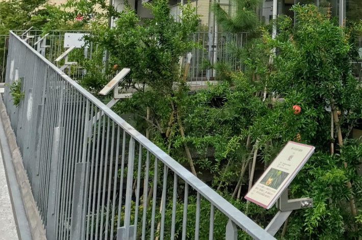 漱石山房記念館の外に植物の説明パネルが並んでいる